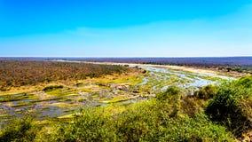 De bijna droge Olifant-Rivier in het Nationale Park van Kruger in Zuid-Afrika aan het eind van het droge seizoen stock fotografie