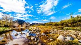 De bijna droge Sycomoorkreek in de McDowell-Bergketen in Noordelijk Arizona stock foto