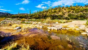 De bijna droge Sycomoorkreek in de McDowell-Bergketen in Noordelijk Arizona royalty-vrije stock afbeelding