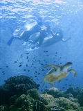 De bikini zwemt met overzeese schildpad Royalty-vrije Stock Afbeelding