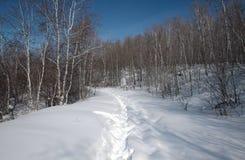 De de wintersneeuw Royalty-vrije Stock Fotografie