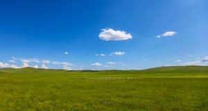 De binnen weide van Mongolië stock afbeelding