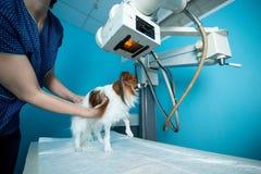 De binnenlandse hond bevindt zich op de lijst onder de Röntgenstraalmachine Dierenartskliniek royalty-vrije stock afbeeldingen