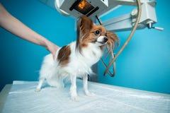 De binnenlandse hond bevindt zich op de lijst onder de Röntgenstraalmachine Dierenartskliniek stock foto's