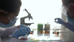 De biologische analyse, laboratoriumtechnici leidt chemisch experiment in petrischalen en neemt steekproeven bij kliniek stock video