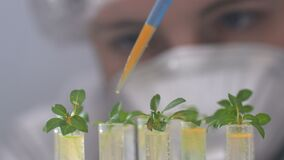 De bioloog giet de reagens in reageerbuizen met installaties stock video