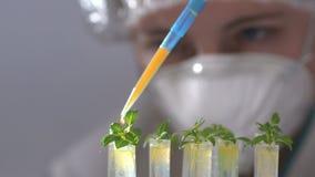 De bioloog laat vallen vloeistof in reageerbuis met installatiespecimen stock footage