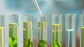 De bioloog voegt olieachtige vloeistof aan installaties in reageerbuizen toe, het effect van de milieuverontreiniging stock footage