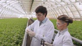 De bioloog zet spruit in reageerbuis want het laboratorium analyseert stock video