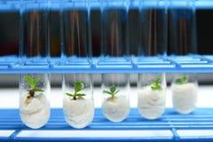 De biotechnologieReeks 2 van de installatie Stock Foto