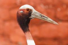 De bizarre vogel Stock Afbeeldingen