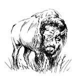 De bizon van de handschets Stock Afbeeldingen