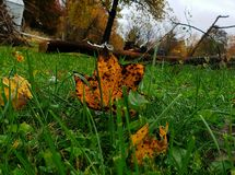 De bladeren beginnen te vallen royalty-vrije stock foto's