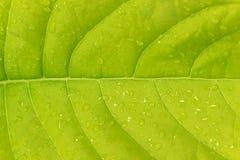 De bladeren, Dalingen van water Stock Foto's