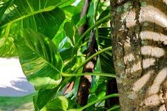 De bladeren die bij de basis van de boom zijn stock foto's