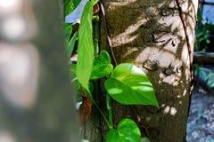 De bladeren die bij de basis van de boom zijn royalty-vrije stock afbeeldingen