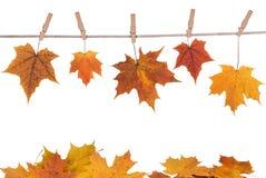De bladeren die van de daling op een doek hangen royalty-vrije stock fotografie