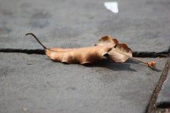 De bladeren drogen wegens droogte op Royalty-vrije Stock Fotografie