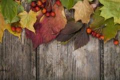 De bladeren en de appelen van de de herfstesdoorn Royalty-vrije Stock Afbeeldingen