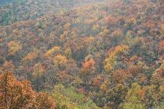 De bladeren en de bomen van de herfst Stock Foto's