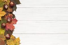 De bladeren en de kastanjes van de herfst Op zee Stock Foto's