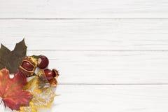 De bladeren en de kastanjes van de herfst Op zee Stock Afbeeldingen