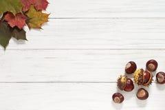 De bladeren en de kastanjes van de herfst Op zee Stock Foto