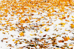 De bladeren en de sneeuw van de herfst Royalty-vrije Stock Afbeeldingen