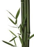 De bladeren en de stelen van het bamboe Royalty-vrije Stock Foto