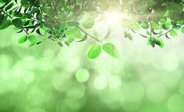 De bladeren en het gras tegen a defocussed achtergrond Stock Afbeelding