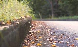 De bladeren en het gras van de de herfstdaling Royalty-vrije Stock Fotografie