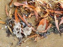 De bladeren en het puin wasten omhoog op het zand Royalty-vrije Stock Foto