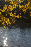 De bladeren en het water van de herfst Stock Foto's