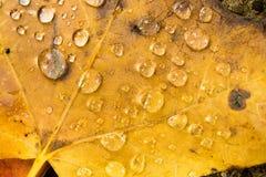 De bladeren Gevallen Grond Autumn Season Change Dew Drop van de de Winteraard Stock Foto's