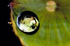 De bladeren Glob van Lotus Royalty-vrije Stock Foto