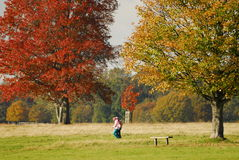 De bladeren Londen van de herfst Royalty-vrije Stock Afbeeldingen