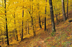 De bladeren no.11 van de herfst Stock Fotografie