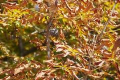 De bladeren op een achtergrond van een vaag zonnig bos, vatten natuurlijke Beperkte achtergronden samen velddiepte Er zijn ruimte royalty-vrije stock foto