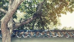 De bladeren op het dak Stock Foto's