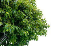 De bladeren op wit royalty-vrije stock foto