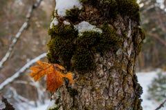 De bladeren, de Pijnboomnaalden, het Mos, en het Hout in de de wintersneeuw vallen Stock Foto