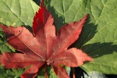 De bladeren sluiten omhoog Stock Afbeelding