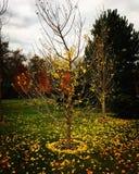 De bladeren vallen neer royalty-vrije stock afbeelding
