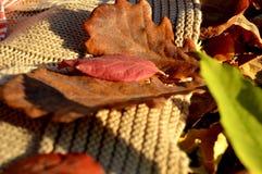 De bladeren van Ðutumn Royalty-vrije Stock Foto