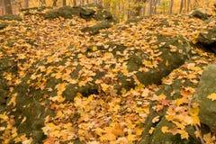 De bladeren van Autmn Royalty-vrije Stock Fotografie
