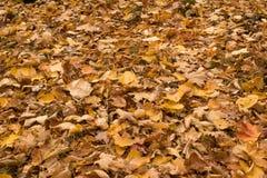De bladeren van Autmn Stock Afbeelding