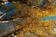 De bladeren van Autom Stock Fotografie