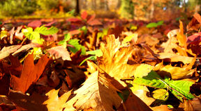 De bladeren van Autum royalty-vrije stock foto's