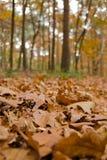 De bladeren van Autum in het bos stock afbeeldingen