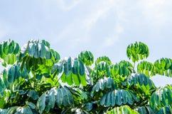 De bladeren van de boom royalty-vrije stock afbeeldingen